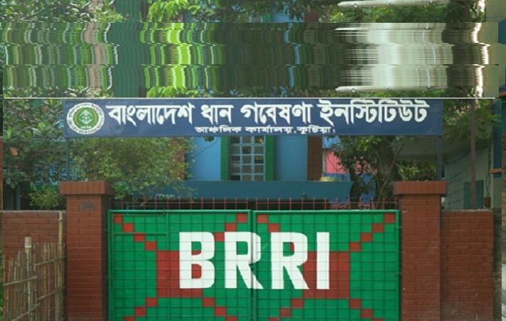 Bangladesh Rice Research Institute Job Circular 2016